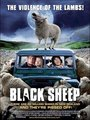 Affiche de Black sheep
