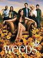 Affiche de Weeds
