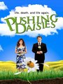 Affiche de Pushing Daisies